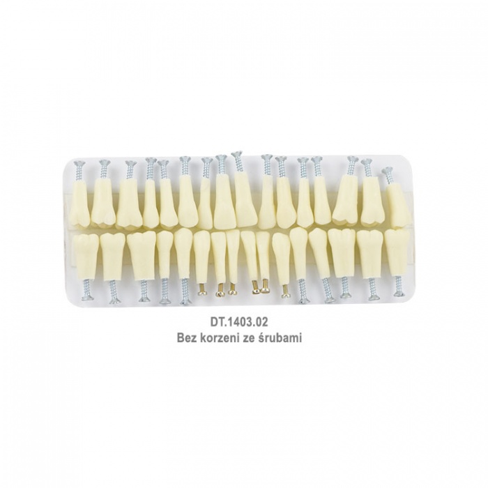 Plastic Teeth For Typodont, Set Of 32 Pieces Without Roots With Screws